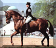 Dressage button