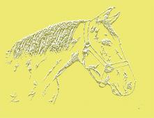 Horse Head Background